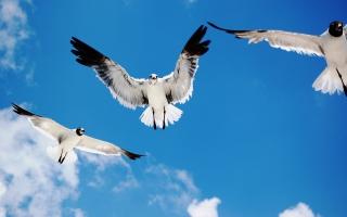 Seagulls Attack