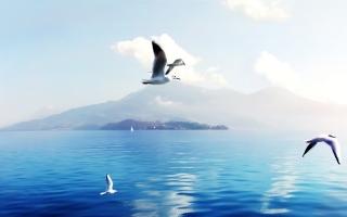 Seagulls in Switzerland