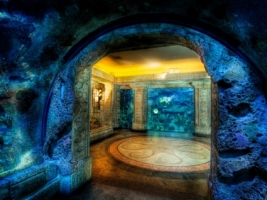 Shark Reef Aquarium Wallpaper United States World