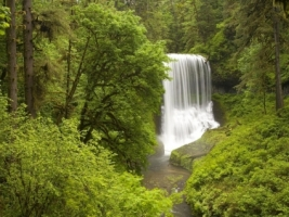 Silver Falls State Park Wallpaper Waterfalls Nature