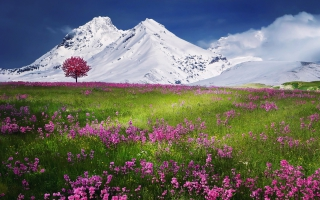 Snow Mountains Landscape