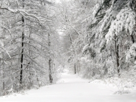 Snow Path Wallpaper Winter Nature