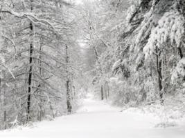 Snow Path Wallpaper Winter Nature