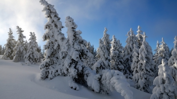 Snow Trees  HDTV 1080p