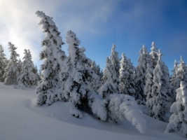 Snow Trees Wallpaper Winter Nature