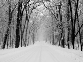 Snowy Road Wallpaper Winter Nature