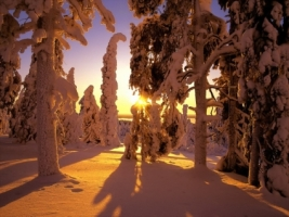 Snowy Sunset Wallpaper Winter Nature