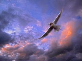 Soaring Gull Wallpaper Birds Animals