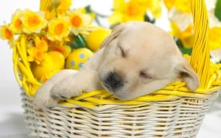 Springtime Snooze
