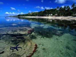 Starfish Along the Coral Coast Beach