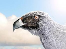 Strange Eagle