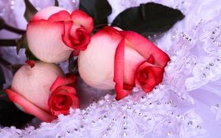 Strange Roses
