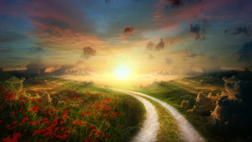 Sun Poppy Path Landscape