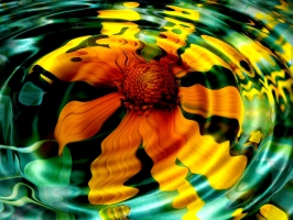 Sunflower in Water
