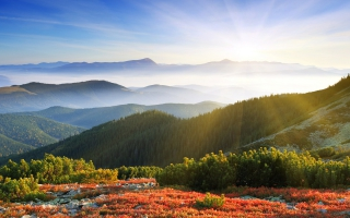 Sunrise Forest Mountains