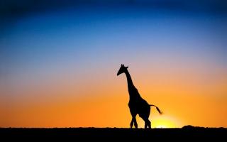 Sunset & Giraffe Botswana