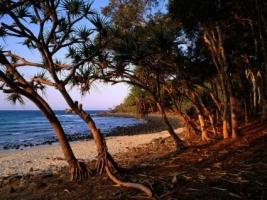 Tea Tree Beach Wallpaper Australia World