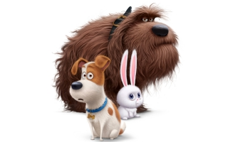 The Secret Life of Pets 4K 8K
