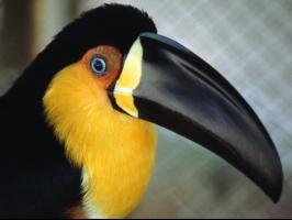 Tiere Animals Voegel Papageien