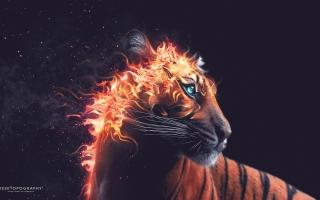 Tiger Fire