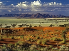 Tok Tokkie Desert Wallpaper Landscape Nature