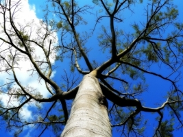 Tree branches Wallpaper Plants Nature