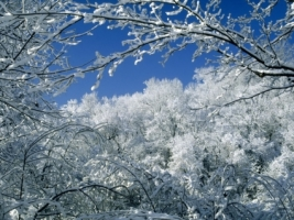 Trees Covered With Snow Wallpaper Winter Nature