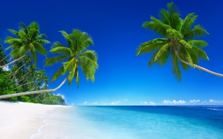 Tropical Beach Paradise K