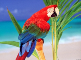 Tropical Colors Parrot