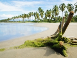 Tropical Shore Wallpaper Beaches Nature