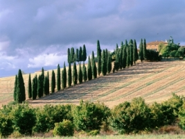 Val d Orcia Wallpaper Italy World