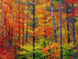 Vibrant Autumn Colors Wallpaper Autumn Nature