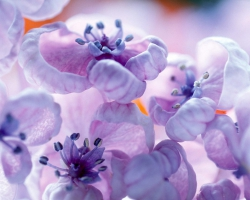 Violet Colors