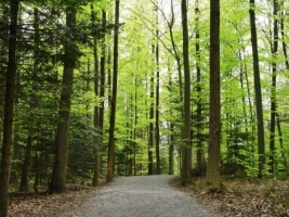 Way in the forest Wallpaper Landscape Nature