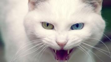 Wild White Cat
