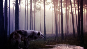 Wolf Eyes Wallpapers For Free Download About 105 Wallpapers