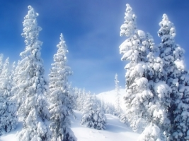 Winter Wonderland Wallpaper Winter Nature